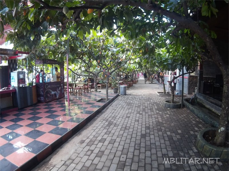 Wisata Edukasi Kampung Coklat Blitar Mblitar Net Suasana Kebun Cokelat