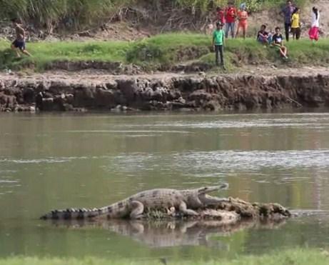 Pesona Keindahan Wisata Sungai Porong Sidoarjo Daftar Tempat Sarankan Mencari