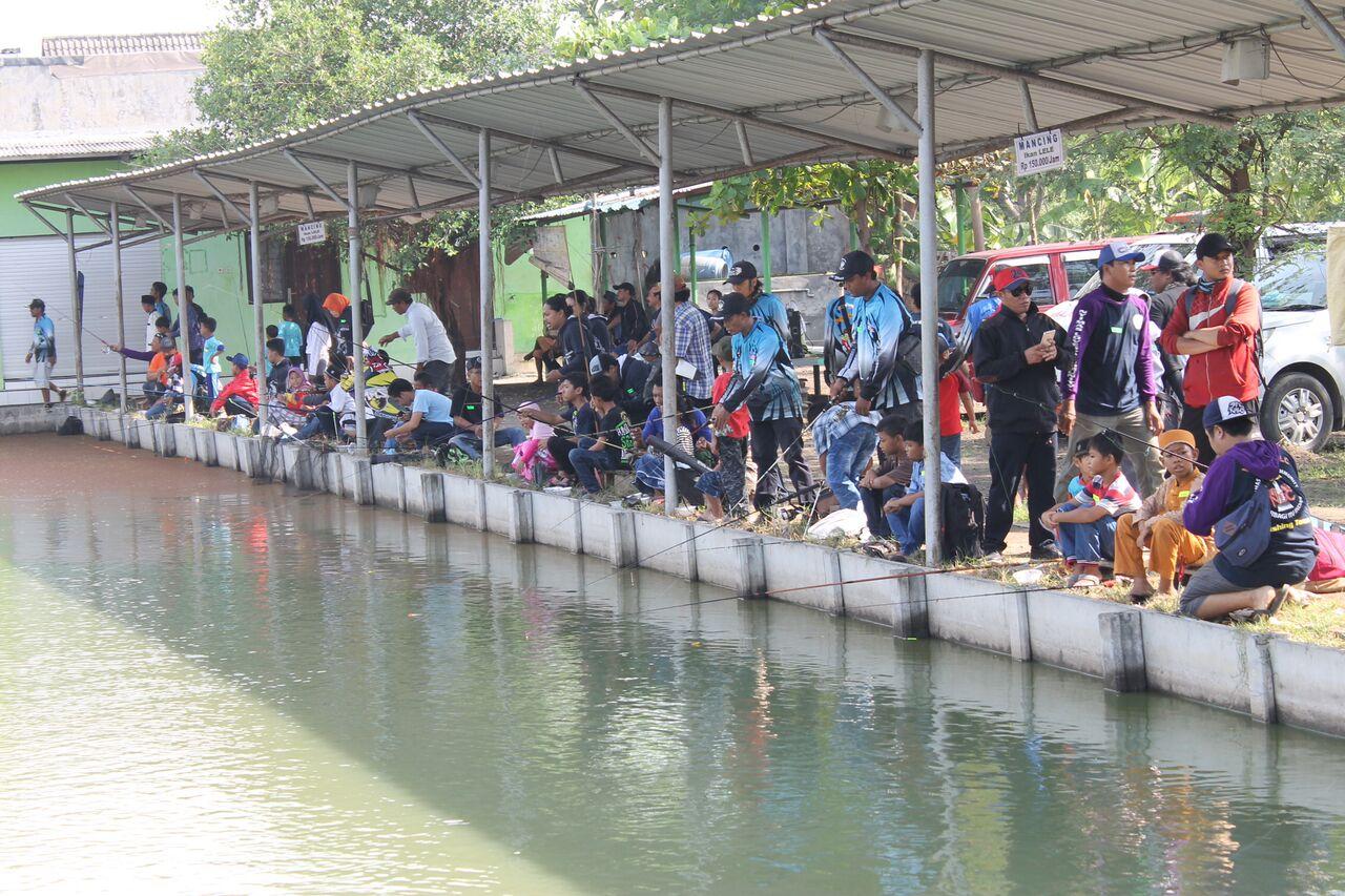 Kolam Pancing Harian Kiloan Sukamancing Informasi Tempat Pemancingan Delta Kab