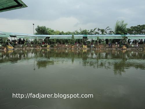 Sarana Informasi Delta Fishing Sidoarjo Refreshing Mancing Kolam Pemancingan Tempat