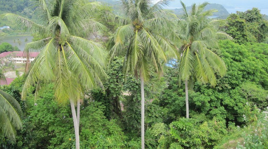 Tempat Wisata Info Hutan Iboih Pulau Weh Kampung Sepatu Krian