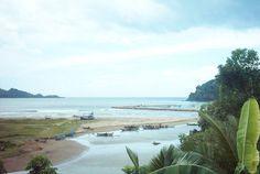 Perkebunan Kopi Kayu Mas Situbondo 27 Tempat Wisata Pantai Tangsi