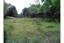 Tanah Dijual Kalibagor Lokasi Strategis Industri Genteng Kab Situbondo