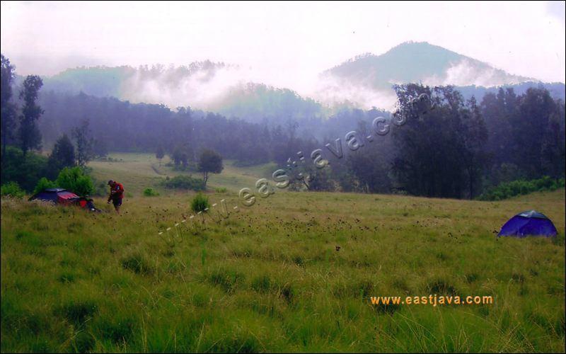 Padang Rumput Sikasur Situbondo Pusat Data Kabupaten Kelenteng Poo Tong