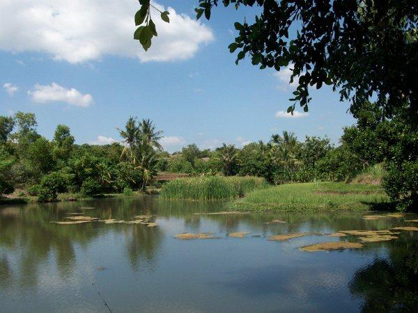 25 Tempat Wisata Terbaik Situbondo Jawa Timur Bendungan Curah Cottok