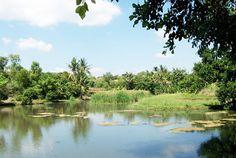 Perkebunan Kopi Kayu Mas Situbondo 27 Tempat Wisata Bendungan Curah