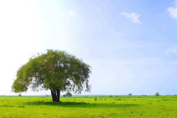 10 Tujuan Wisata Situbondo Beritau Net Taman Nasional Baluran Adrianto76
