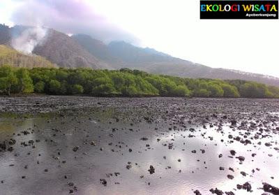 Ekologi Wisata Ekowisata Pantai Batu Remuk Situbondo Alun Taman Kota