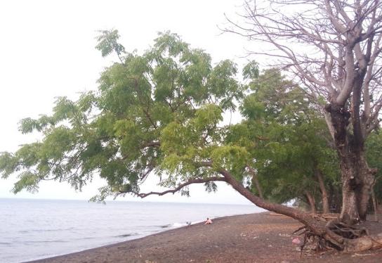Pesona Keindahan Wisata Pantai Banongan Situbondo Daftar Tempat Alun Taman