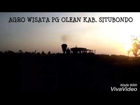 Sensasi Wisata Sepoor Uap Pabrik Gula Olean Situbondo Youtube Kab