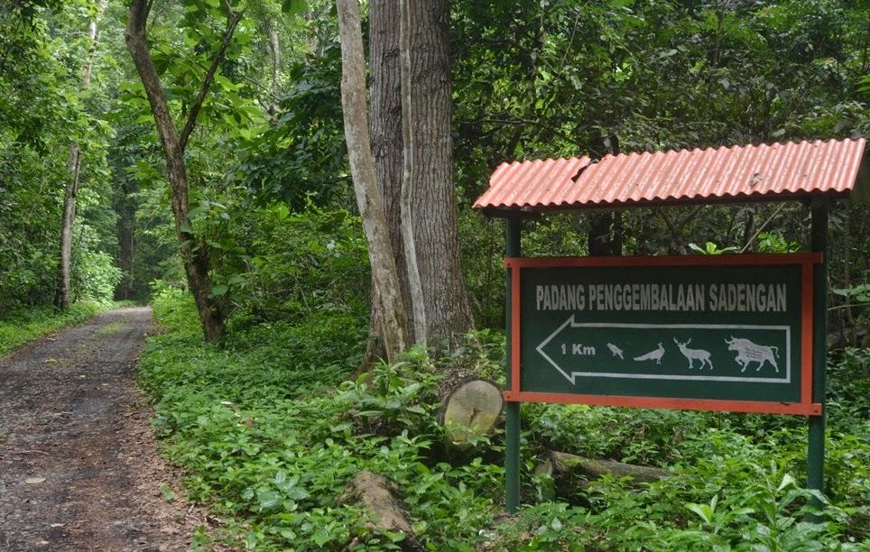 5 Tempat Wisata Sebaiknya Jangan Dikunjungi Tribunnews Alas Purwo Banyuwangi