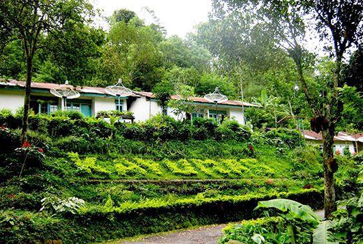 Perkebunan Kopi Kayu Mas Situbondo 27 Tempat Wisata Rumah Residen