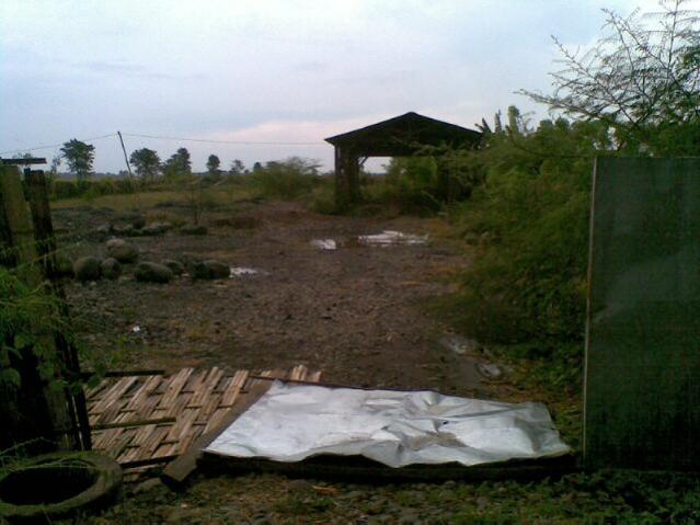 Tanah Dijual Strategis Jalan Nasional Pantura Besuki 4480m2 Wisata Rumah