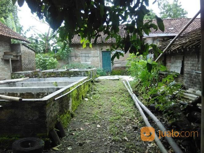 Tanah Pekarangan Bonus Rumah Sederhana Selatan Candi Abang Kab Bonu