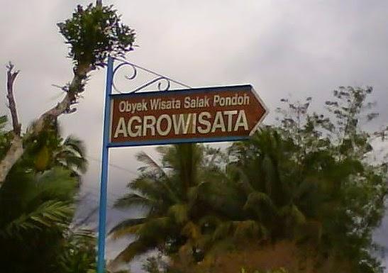Agrowisata Salak Pondoh Info Jogja Wisata Edukasi Omah Kab Sleman