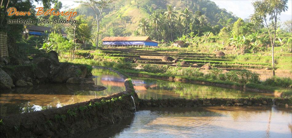 Desa Wisata Betisrejo Header4 Header5 Alam Kab Sragen