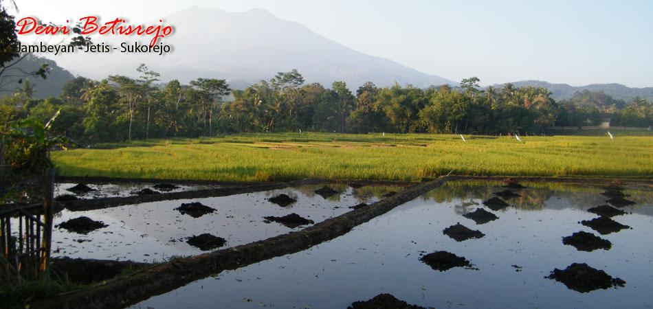 Desa Wisata Betisrejo Landscape Alam Kab Sragen