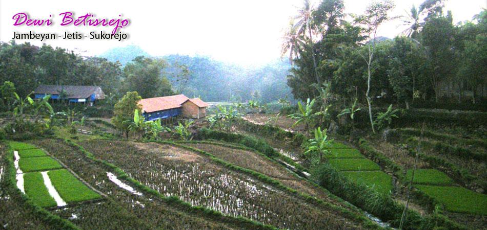 Desa Wisata Betisrejo Landscape Pertanian Padi Organik Header2 Header3 Alam