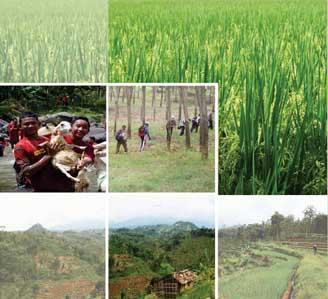Dewi Betisrejo Desa Wisata Jambean Jetis Sukorejo Informasi Db Intip