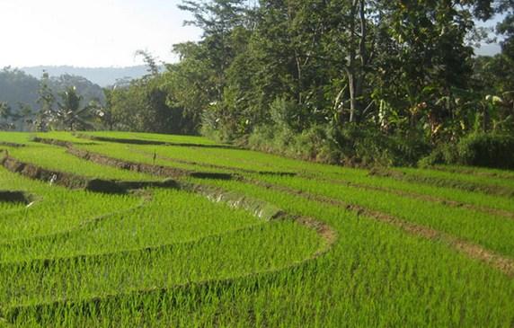 Pesona Keindahan Destinasi Wisata Alam Betisrejo Jambeyan Sarankan Mencari Mengetik