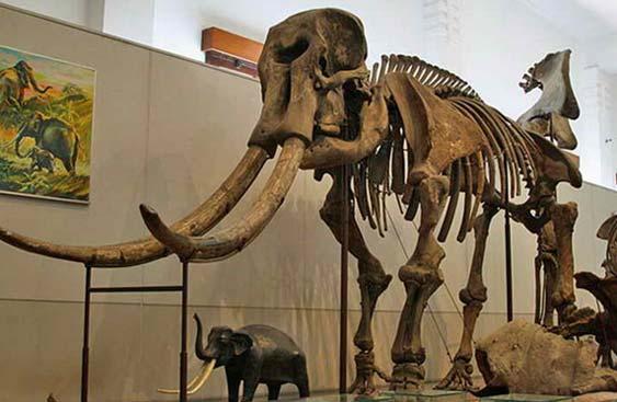 13ribu Koleksi Fosil Manusia Purba Museum Purbakala Sangiran Terletak Kabupaten