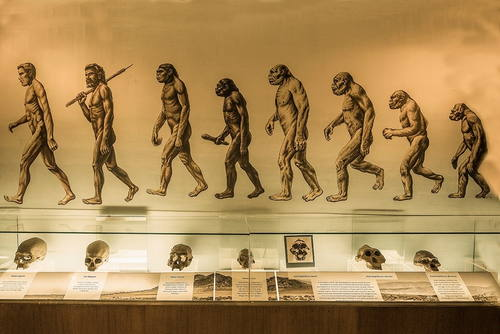 Belajar Asal Usul Manusia Sangiran Metrosemarang Kabar Wisata Museum Prasejarah