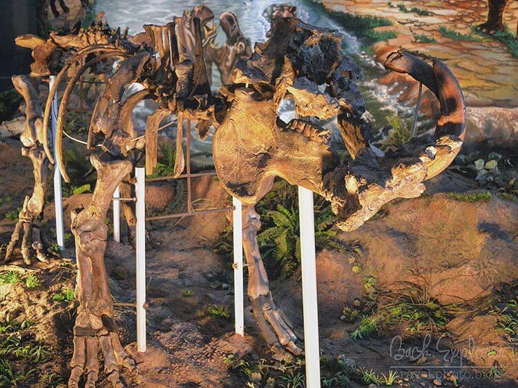 Museum Purba Sangiran Arkeologi Terlengkap Asia Foto Fosil Dinosaurus Wisata