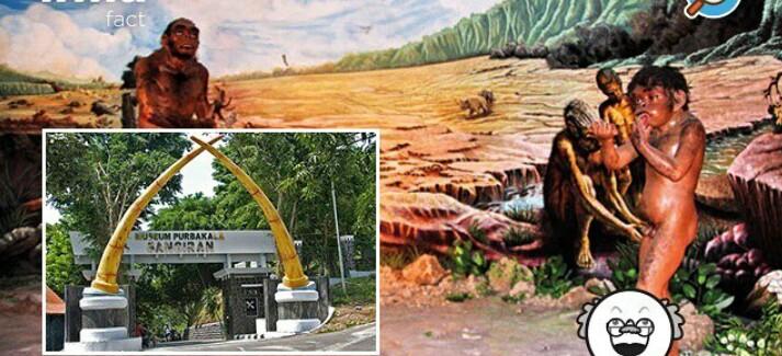 Museum Purbakala Sangiran Kabupaten Sragen Objek Wisata Tempat Penelitian Tentang