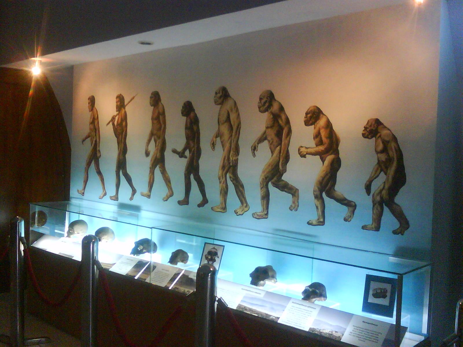 Museum Purbakala Sangiran Tempat Wisata Pra Sejarah Terbaik Dunia Indonesia