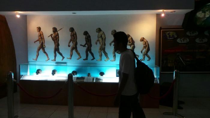 Tengkorak Manusia Museum Purbakala Sangiran Tribun Jateng Pengunjung Melintas Gambar