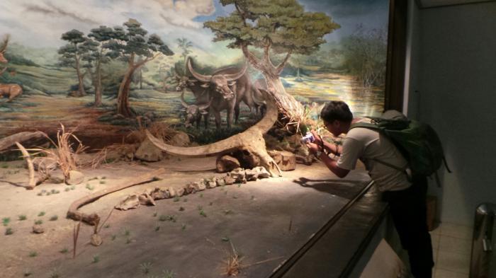 Tengkorak Manusia Museum Purbakala Sangiran Tribun Jateng Wisata Prasejarah Kab