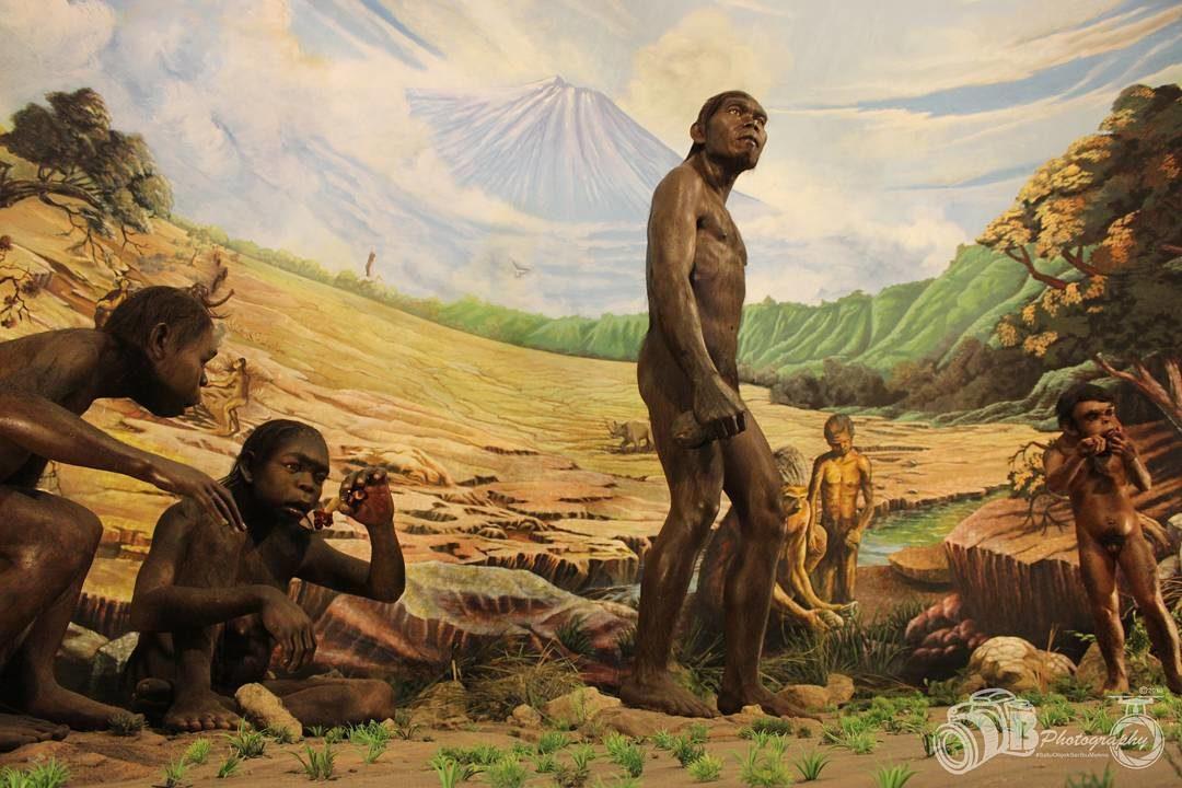 Wisata Edukatif Museum Manusia Purba Sangiran Prasejarah Kab Sragen