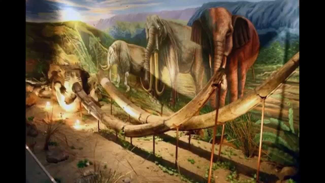 Wisata Mengenal Barang Bersejarah Museum Sangiran Prasejarah Kab Sragen