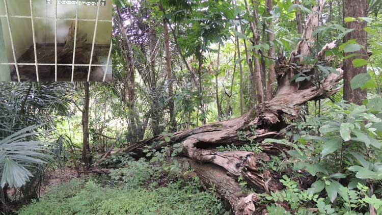 Pustaka Agung Sunan Tembayat Ki Kebo Kanigoro Tanda Pohon Jati