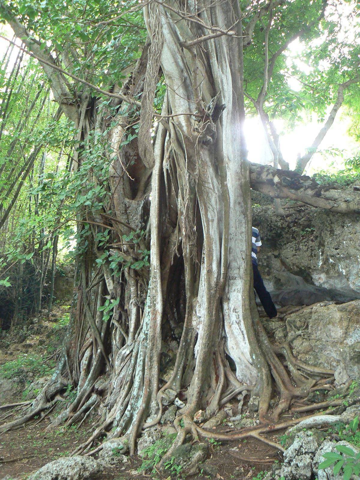 Ronny Blog Goa Sapi Pulau Sapudi Kab Sumenep Madura Diposting