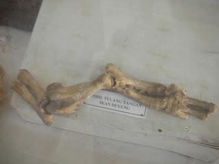 Hanif Sakala Mengintip Keraton Sumenep Fosil Tulang Tangan Ikan Duyung