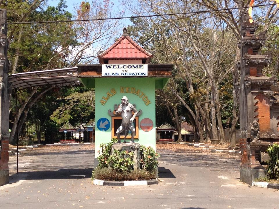 Alas Kedaton Bali Attraction Indonesia Justgola Copy Irina Plahotnyuk Kab