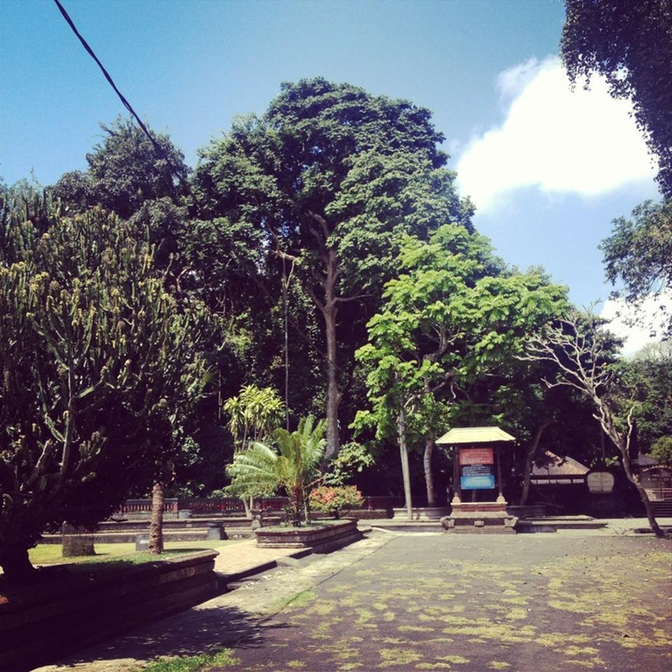 Alas Kedaton Bali Attraction Indonesia Justgola Copy Widi Artini Kab