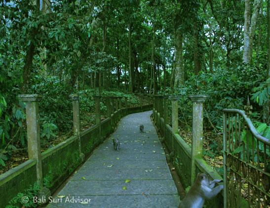 Alas Kedaton Bali Monkey Forest Kab Tabanan