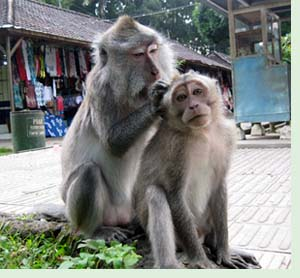Alas Kedaton Bali Monkey Forest Tabanan Kab