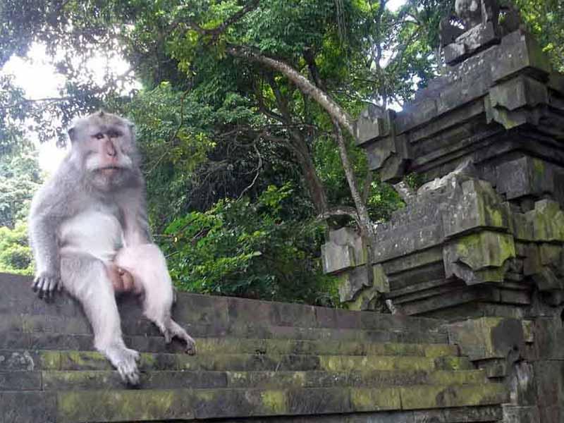 Alas Kedaton Bali Pesona Alam Hutan Menawan Kab Tabanan