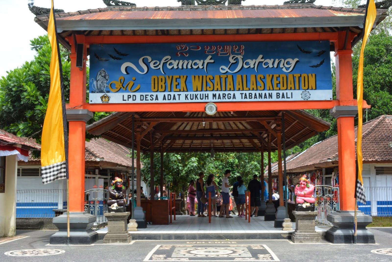 Alas Kedaton Melihat Kehidupan Kera Hutan Alami Bali Kab Tabanan
