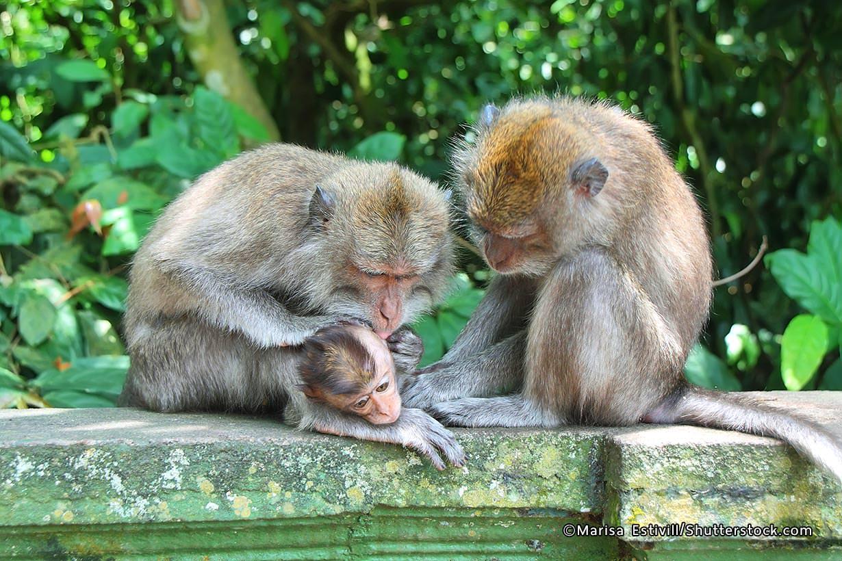 Alas Kedaton Monkey Forest Bali Attractions Kab Tabanan