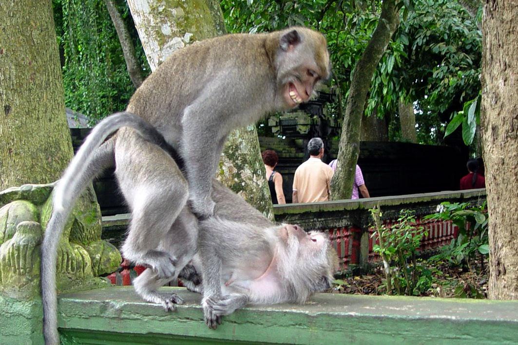 Alas Kedaton Monkey Forest Bali Day Trip Small Width 6
