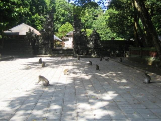 Alas Kedaton Monkey Forest Bali Hot Deals Tours Travel Temple