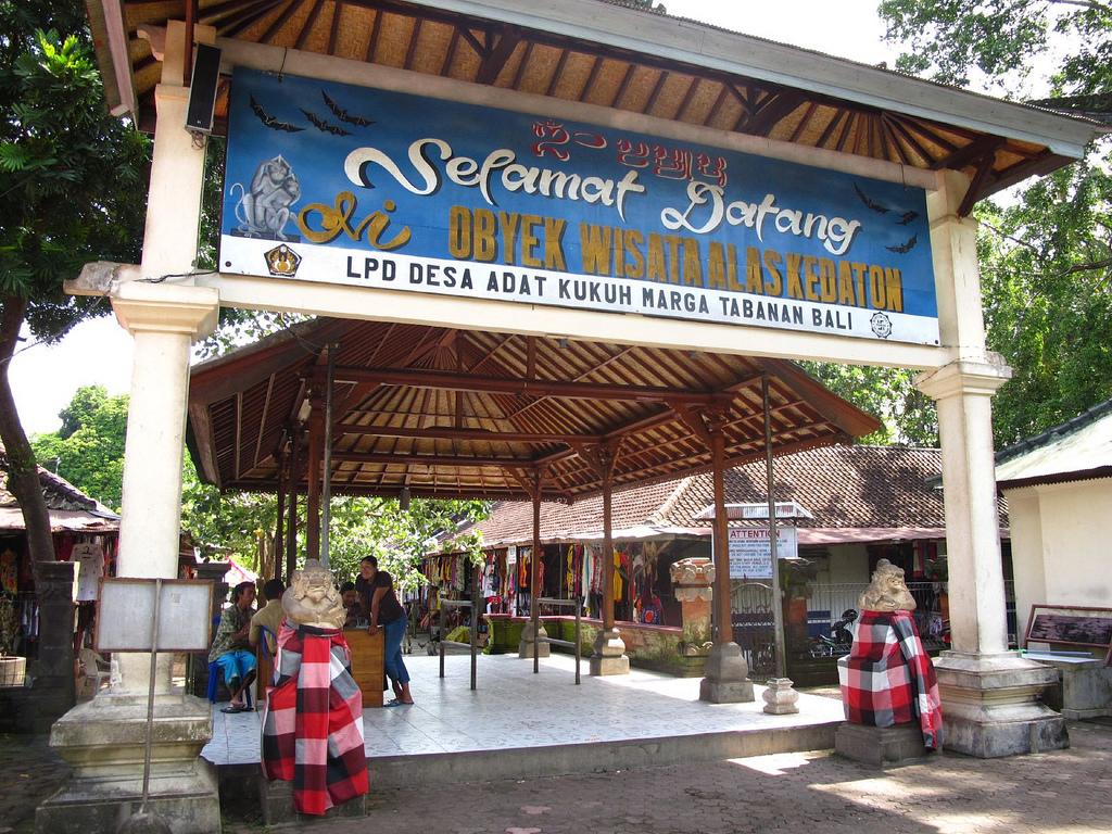 Alas Kedaton Monkey Forest Bali Personal Indonesia Copy Kab Tabanan