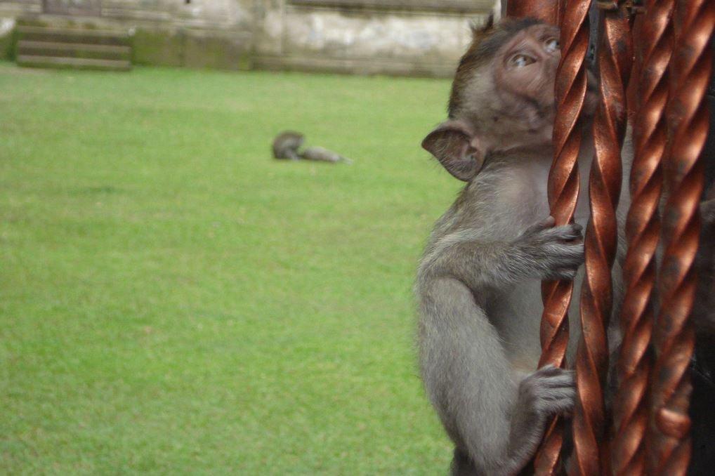 Alas Kedaton Monkey Forest Kab Tabanan