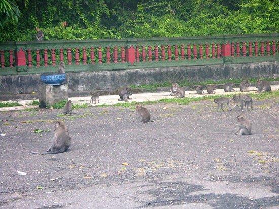 Alas Kedaton Monkey Forest Picture Tabanan Kab