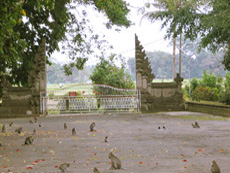 Alas Kedaton Monkey Forest Tabanan Regency Temple Kab