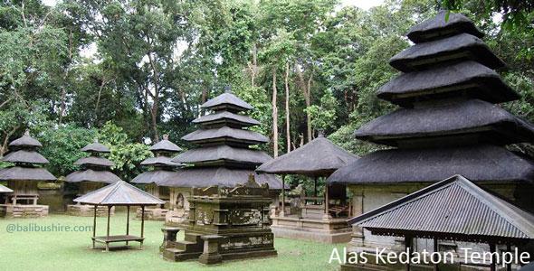 Alas Kedaton Temple Bali Monkey Forest Kab Tabanan